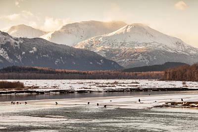 Chilkat Bald Eagle Preserve In Winter Poster