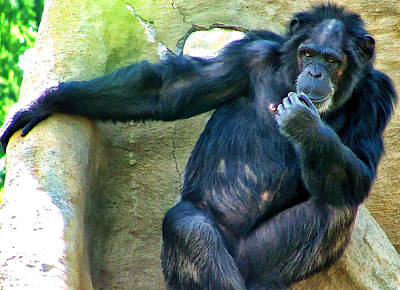 Poster featuring the photograph Chimp 1 by Dawn Eshelman