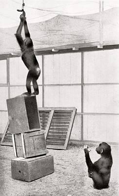 Chimpanzee Research Poster