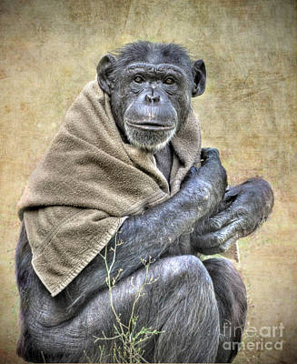 Poster featuring the photograph Chimpanzee by Savannah Gibbs