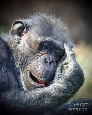 Poster featuring the photograph Chimpanzee Thinking by Savannah Gibbs