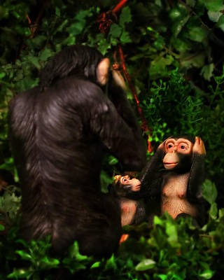 Chimps Poster by Diane Bradley