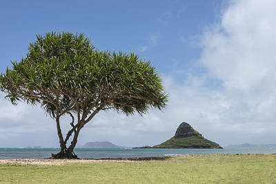 Chinamans Hat With Tree - Oahu Hawaii Poster