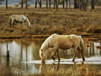 Chincoteague Gold Poster