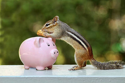 Chipmunk Saving Peanut For A Rainy Day Poster