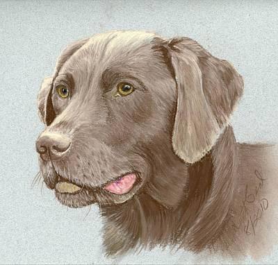 Chocolate Labrador Retriever Poster