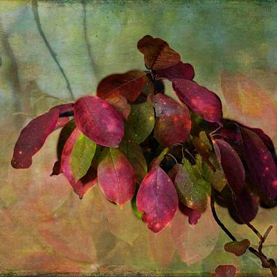 Chokecherry Leaves Poster by Shirley Sirois