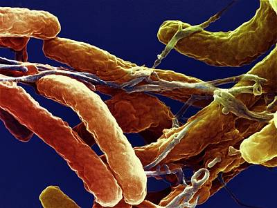 Cholera Bacteria Poster by Ami Images