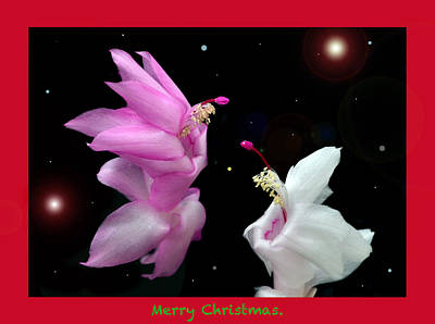 Christmas Cactus Fantasy Poster by Terence Davis