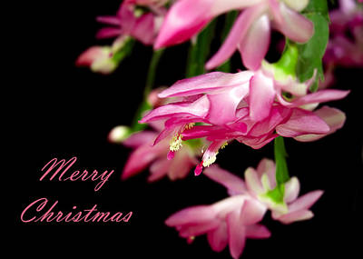 Christmas Cactus Greeting Card Poster
