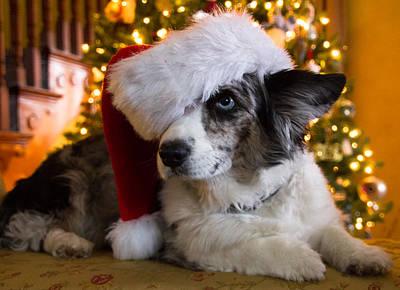 Christmas Corgi Poster