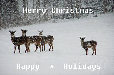 Christmas Deer Poster by Aimee L Maher Photography and Art Visit ALMGallerydotcom