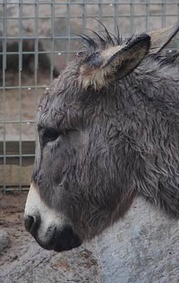 Christmas Donkey Poster