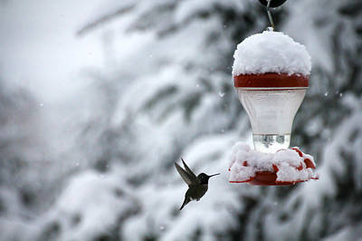 Christmas Hummingbird Poster