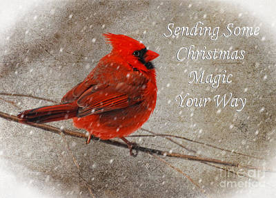 Christmas Magic Cardinal Card Poster by Lois Bryan