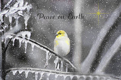 Christmas Peace Poster