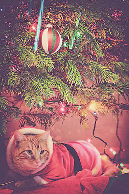 Christmas Tabby Poster by Melanie Lankford Photography