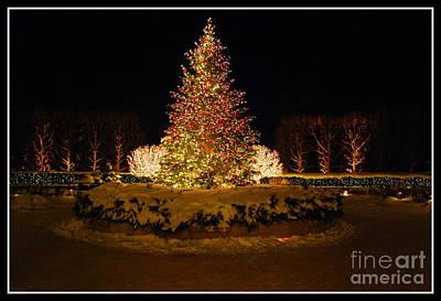 Christmas Tree At Chicago Botanic Garden Poster by Nancy Mueller