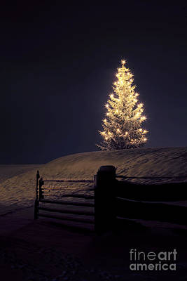 Christmas Tree In Snow Poster
