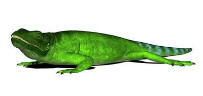 Chuckwalla Lizard Poster by Friedrich Saurer