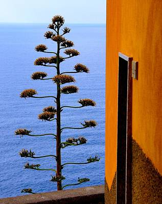 Cinque Terre View Poster by Debi Demetrion