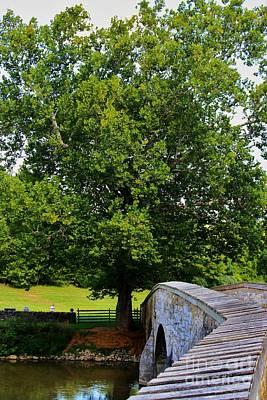 Civil War Era Eastern Sycamore Tree Poster by Patti Whitten