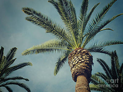Poster featuring the photograph Classic Palms2 by Meghan at FireBonnet Art