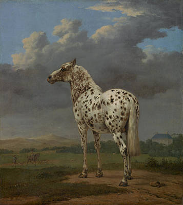 Classic Piebald Horse Painting Print Poster by Georgia Fowler