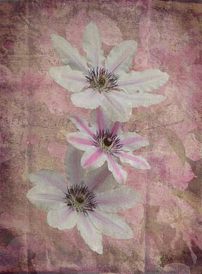 Clematis Divine Poster by Angie Vogel