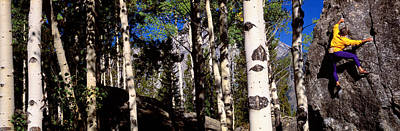 Climber Aspens Grand Teton National Poster by Panoramic Images
