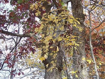 Close Up Fall Tree  Poster