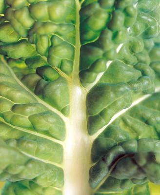 Close Up Of Bumpy Vegetable Leaf Poster