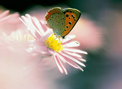 Close Up Of Butterfly On Flower Poster by Panoramic Images