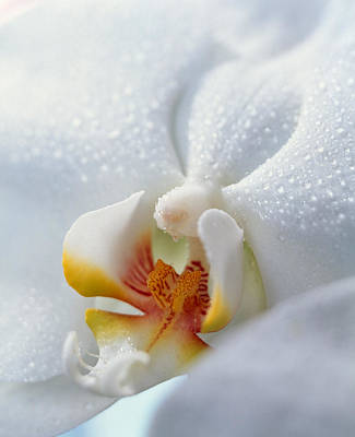 Close Up Of Center Of White Orchid Poster by Panoramic Images