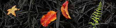 Close-up Of Different Leaves Poster by Panoramic Images