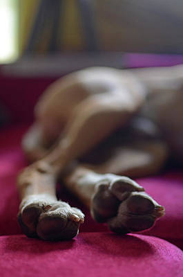 Close Up Of Dog Paws While Sleeping Poster