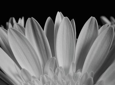 Close Up Of Flower Petals  Waterloo Poster by David Chapman