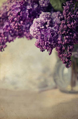 Close Up Of Fresh Lilacs Poster