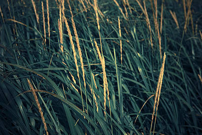Close Up Of Grass Along Old Womens Bay Poster