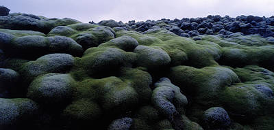 Close-up Of Moss On Rocks, Iceland Poster