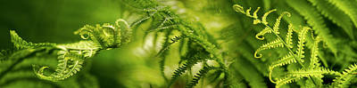Close-up Of Multiple Images Of Ferns Poster by Panoramic Images