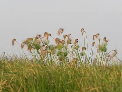 Close-up Of Papyrus Plants, Okavango Poster