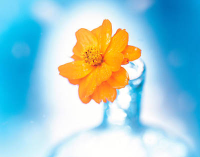 Close Up Of Ruffled Marigold Bloom Poster by Panoramic Images