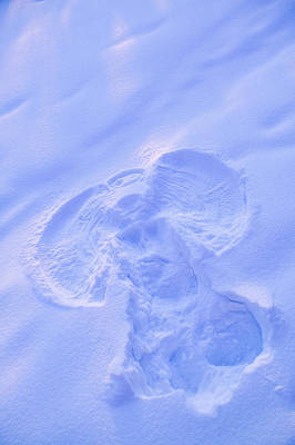 Close Up Of Snow Angel At Sunset With Poster by Kevin Smith