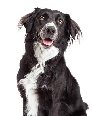 Closeup Of Border Collie Mix Breed Dog Poster by Susan Schmitz