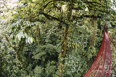Cloud Forest Canopy Poster