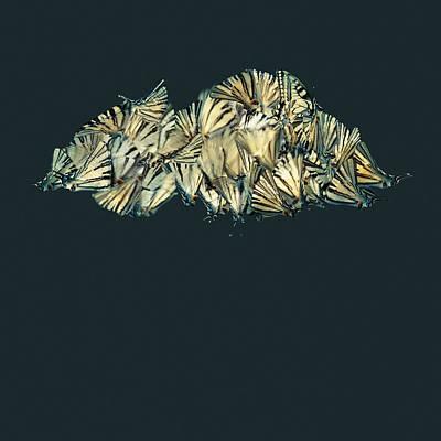 Cloud Of Butterflies Poster by Floriana Barbu