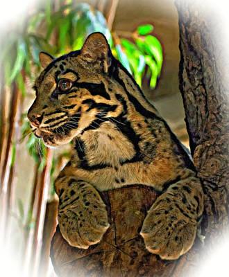 Clouded Leopard Oil Poster by Steve Harrington