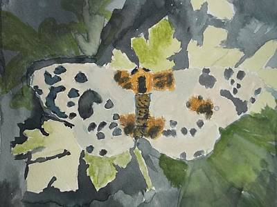 Clouded Magpie Watercolor On Paper Poster