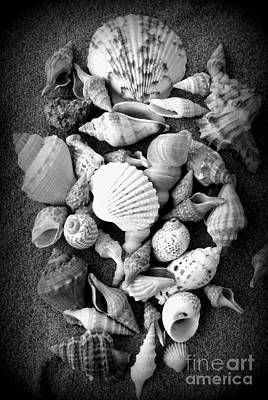 Cluster Of Shells Poster